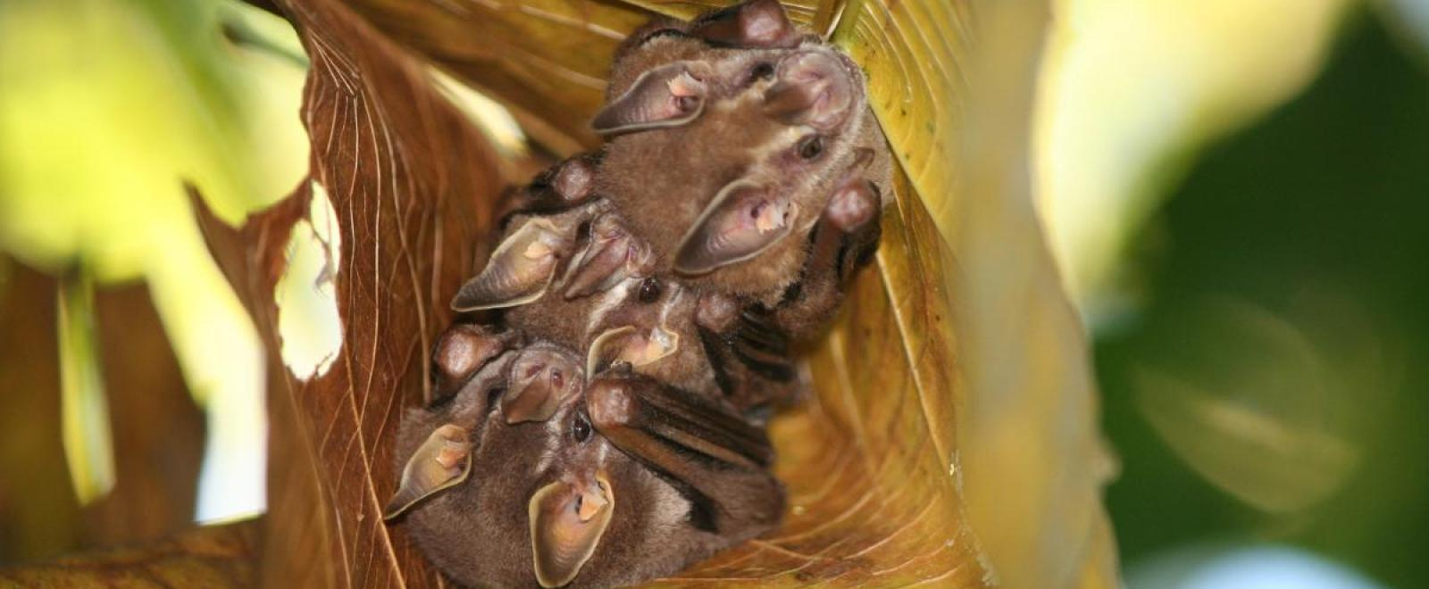 Erfahrungsberichte: Tier- und Naturschutz im Regenwald auf Costa Rica von Duncan M